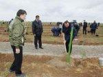 Площадь зеленых насаждений на Абшероне будет увеличена вдвое - министр экол ...